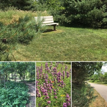 A bench among pinetrees; wildflowers and trails
