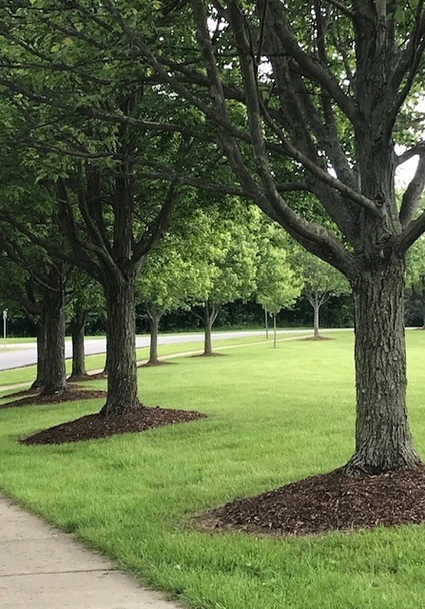 Tree lined view of park entry