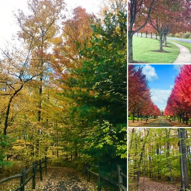 Four views of fall foliage that can be found walking in the Parks system